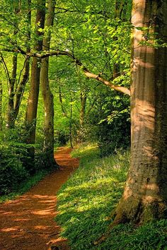 : Path through Wayford Woods, Crewkerne, Somerset