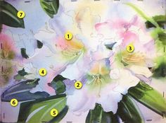 DANIEL SMITH Extra Fine Watercolor Kay Barnes 'Artist Series' 18 Tube Set from Daniel Smith Art Supplies