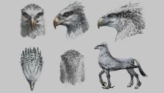 Buckbeak Harry Potter drawing