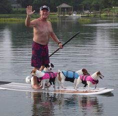 Jacks go paddleboarding. Smooth Fox Terriers, Rat Terriers, Jack Russell Puppies, Jack Russell Terrier, Jack Russell Mix, Dog Training Bells, Rare Dogs, Dog Accessories, Beautiful Dogs