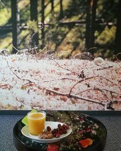 Instagram @annehameenkorpi kylpylän dayspa on kauniisti sisustettu, relaxhuoneessa viihtyy pidempäänkin 💚🌿 #rokua  #rokuahealthspa  #rokuadayspa  #hemmottelupäivä Wellness Spa Hotel, Hotel Spa, Alcoholic Drinks, Table Decorations, Health, Glass, Holiday, Instagram, Home Decor