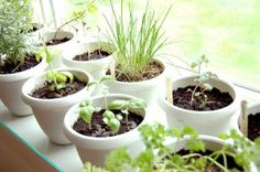 Container Gardening For Beginners Container Herb Garden for Beginners Gardening For Beginners, Gardening Tips, Best Herbs To Grow, Growing Herbs Indoors, Growing Plants, Container Herb Garden, Inside Garden, Kitchen Herbs, Kitchen Ideas