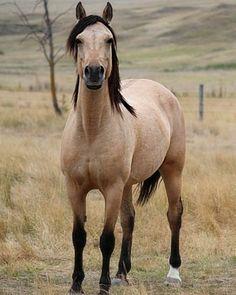 Good morning!#horse#horses#horsesofinstagram#horsetagram#instahorse#instahorses#horselove#horselover#horselife#horselifestyle#horsey#riding#ridingboots#ridingout#love#lover#nature#morning#morningmotivation#mornings