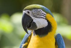 a parrot's eyes ''pin'' when he is excited in any way...makes sense to me!!!