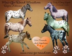 An example of the beautiful appaloosa miniature horses we raise at our farm. ♥