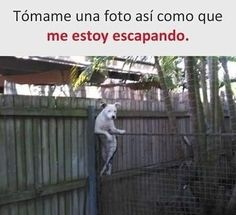 #games #chistes #memes #funnydogpictures