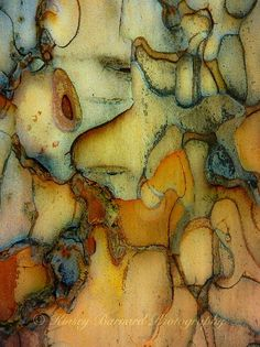 The object is so close up its unidentifiable. It's a piece of tree bark painted as if it were something else. The colours also lead it to look abstract. Patterns In Nature, Textures Patterns, Color Patterns, Nature Pattern, Art Grunge, Art Et Nature, Nature Tree, Doodle Drawing, No Photoshop