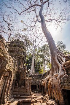 Tree in Ta Phrom Angkor Wat Cambodia. by kasto80