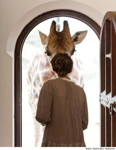 this was my dream when I lived near the SF Zoo... that one morning the giraffes would escape and come visit me at my window.