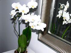 orchidee in one studio www.theonestudio.tumblr.com