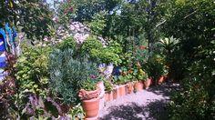 Tickle Tank Open Garden