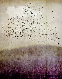 if you're a bird I'm a bird. Jamie Heiden.