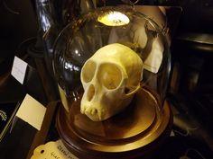 Green Monkey skull.