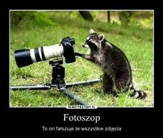 (ANIMAL PICTURES/WILDLIFE PHOTOGRAPHY) While it may be difficult to have animals pose for pictures, these animals seem eager to be the ones behind the camera. Check out these adorable pictures of budding animal photographers. Best Camera For Photography, Wildlife Photography, Animal Photography, Animals And Pets, Baby Animals, Funny Animals, Cute Animals, Cute Raccoon, Racoon