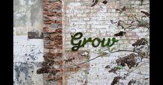 GARDENA zeigt eine einfache Schritt für Schritt Anleitung für das eigene grüne Graffiti.