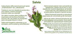 Sage @DeliciiSanatoas Salvia, Sage, Herbs, Plant, Herb, Spice