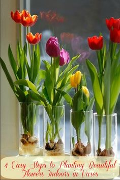 Super #DIY Spring Idea! Step By Step Guide on Planting Beautiful #Flowers Indoors in #Vases