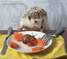 Photograph Who ate my side dish? by Elena Eremina on 500px