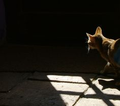 Cat In The Shadows (Stock Photo By crunchcrea) [ID: 130637] - stock.xchng