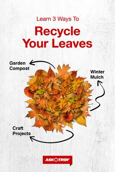Want to reuse your leaves instead of hauling them to the curb? See how they can be composted, used to protect plants and more. Outdoor Plants, Garden Plants, Outdoor Gardens, Garden Compost, Vegetable Garden, Ways To Recycle, Reuse, Different Vegetables, Garden Projects