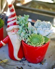 Christmas & succulents