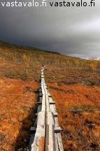 Trekking, Country Roads, Autumn, Rabbits, Fall Season, Fall, Hiking