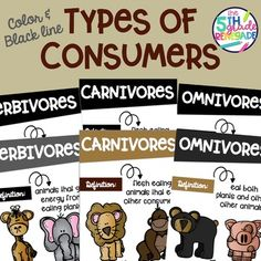 Types of Consumers- Carnivore, Herbivore, Omnivore Posters Science Room Decor, Herbivore And Carnivore, Black White, Printing, Clip Art, Classroom, Posters, Colorful, How To Plan