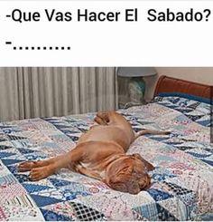 videoswatsapp.com imagenes chistosas videos graciosos memes risas gifs graciosos chistes divertidas humor http://ift.tt/2bxhtPY