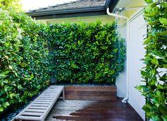 Sichtschutz Die 12 Besten Heckenpflanzen Ziergarten Pinterest