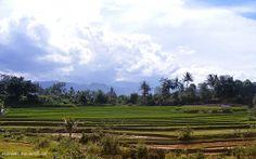 Persawahan - Sumatera Barat