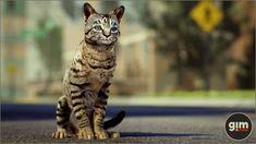 Unreal Engine, Domestic Cat, Game Art, Animation, Studio, Digital, Cats, Nature, Animals