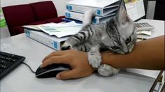 Stubborn cat won't let go of owner's hand while he's working - YouTube
