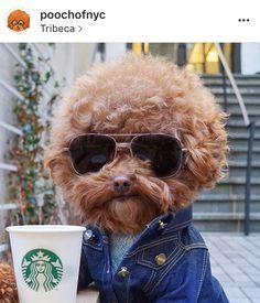 Les animaux envahissent les réseaux sociaux. C'est le cas de ces 15 chiens populaires à suivre sur Instagram. Ils ont des milliers d'abonnés !