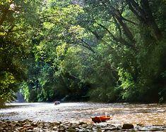 Taman Negara National Park, Malaysia.