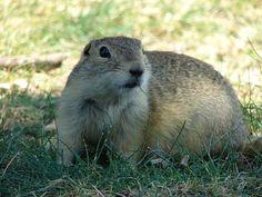 URGENT: Ask Arizona Condominium Community to Stop Poisoning Wildlife!   Action Alerts   Actions   PETA