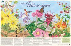 Fédération canadienne de la faune - Pollinisateurs