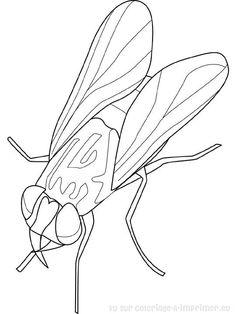 Coloriage Insecte à colorier - Dessin à imprimer