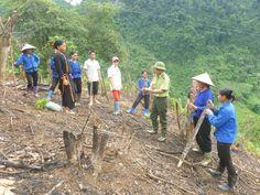 Kết quả hình ảnh cho trồng rừng tại huyện pác nặm