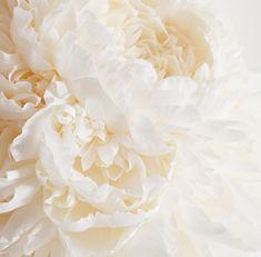 Giant-Paper-Flowers-by-Tiffanie Turner-8