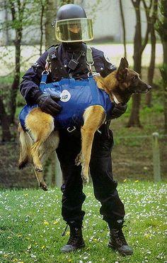 Plus de 1000 id es propos de canidae de tous poils sur for Gendarmerie interieur gouv fr gign