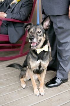What a cute pet ring bearer!! {Paired Images}