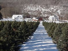Mann's Country Gardens Gift Shop, Christmas Tree Farm, Pure Maple Syrup Products & Gift Boxes