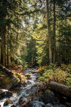 Forest stream - h-abitual