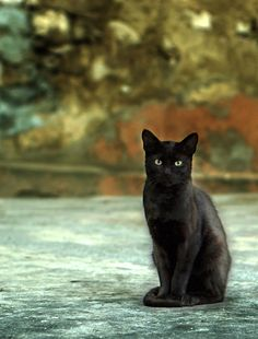 Painterly black cat