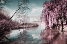 """""""Magical infrared light"""" by nelson garrido silva - Forest Light, Magical Forest, Display Advertising, Print Advertising, Light Images, Us Images, Lit Captions, Plant Images, Colorful Plants"""