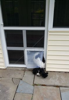 DIY Doggie Door. Car Mat From Walmart ($2 Ea, Used 2 So The Little Pointy  Things Donu0027t Hurt), Cut Out The Screen, A Piece Of Wood Screwed The Mats To  The ...