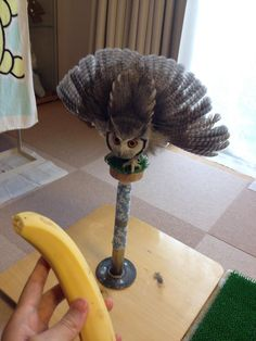 "theveganwonder: "" HE'S SO ANGRY AT THIS BANANA. WHY. """