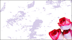 Floricultura 0019