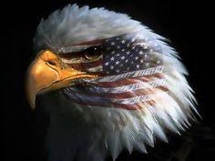 Freedom War Eagle