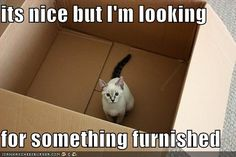 ...looking for something furnished.